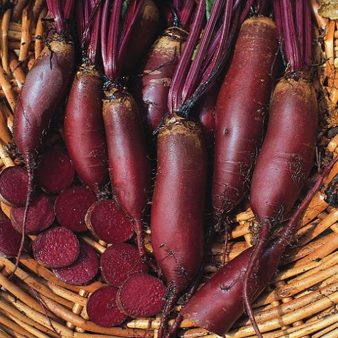 Beetroot Cylindra Seeds - Appx 1000 seeds